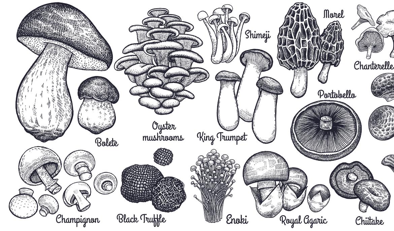 Medicinale paddenstoelen (Reishi, Shiitake, Cordyceps sinensis) bij auto-immuunziekten, zoals de ziekte van Hashimoto